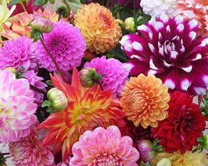 Сажать в тени цветы 113