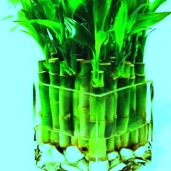 Экзотическое комнатное растение 1