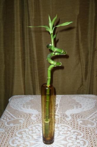 Как в домашних условиях ухаживать за бамбуком