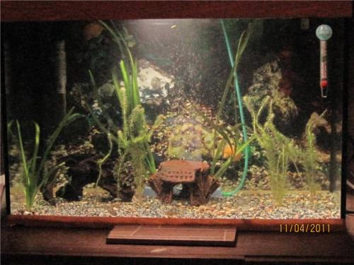 Куда и какие растения сажать в аквариум(фото прилагаю).