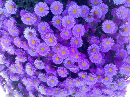 Называются эти замечательные цветы