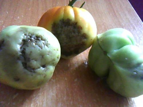 Клубника плодоносит год клубника