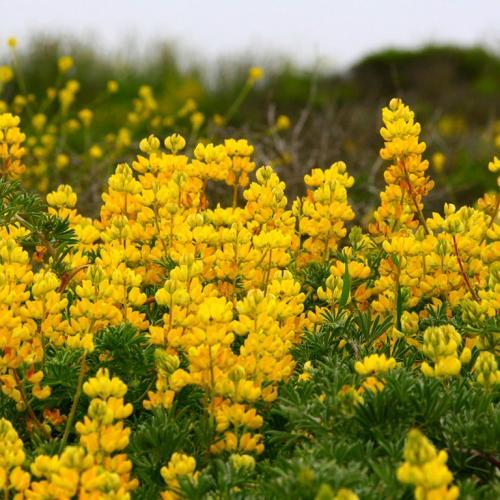 Желтые цветы в лесу и названия 60