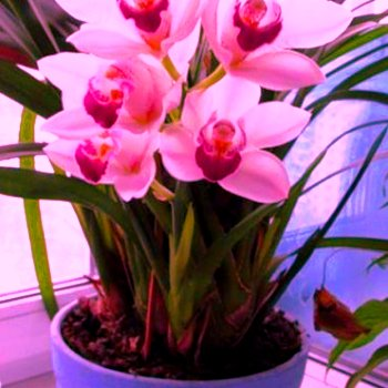 bona forte удобрение для всех комнатных растений инструкция