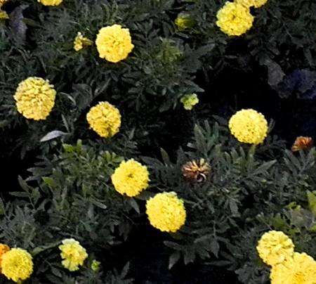 как садить семена в торфяные таблетки видео