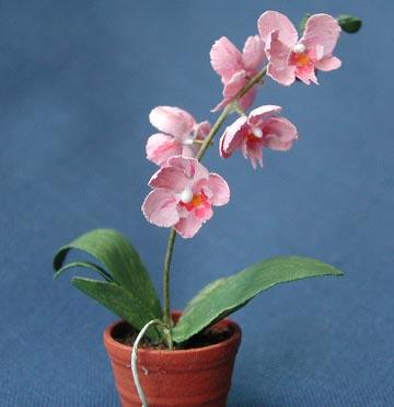 Детки орхидеи фаленопсис youtube