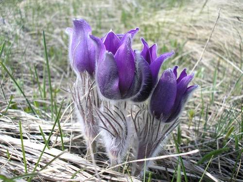 Цветы фото сон трава