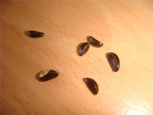 Семена осени
